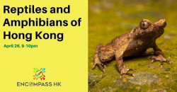Reptiles and Amphibians in Hong Kong